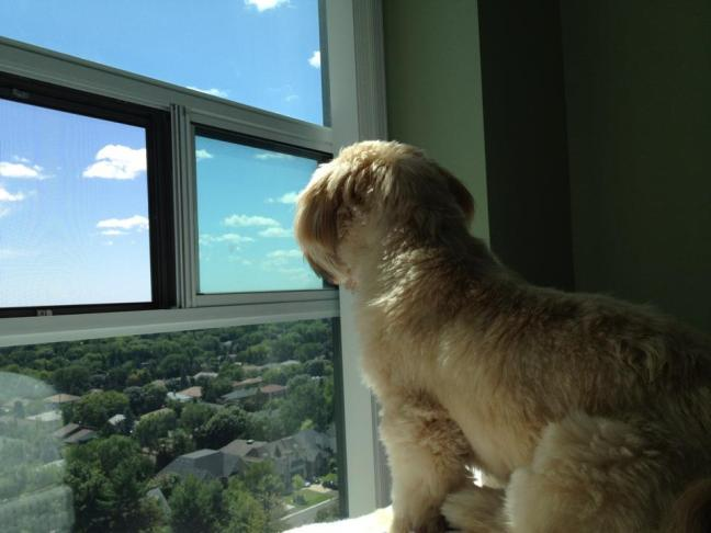 mia-staring-out-window